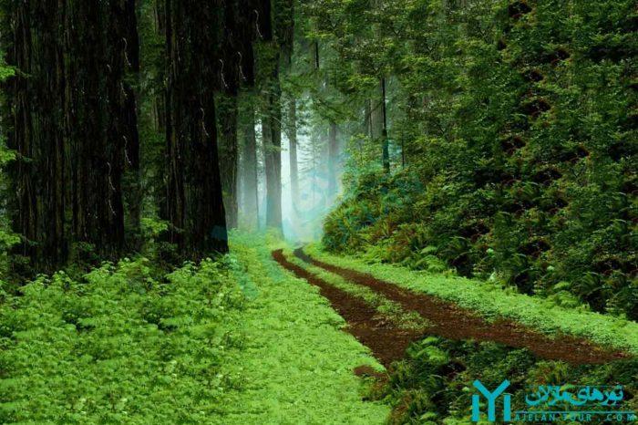 تور جنگلهای تالش و آستارا