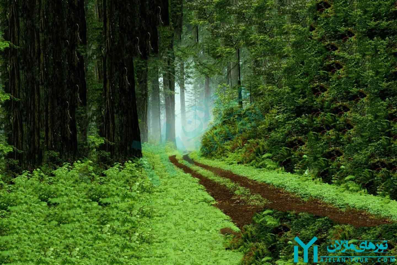 تور جنگلهای تالش و آستارا - پارک جنگلی گیسوم