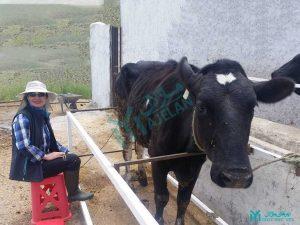مزرعه خورشید - ایستگاه شیردوشی