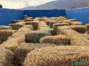 مزرعه خورشید - بازی هزار تو